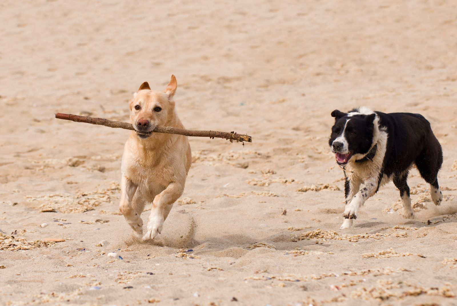 Pet Friendly Vacation Rentals Outer Banks
