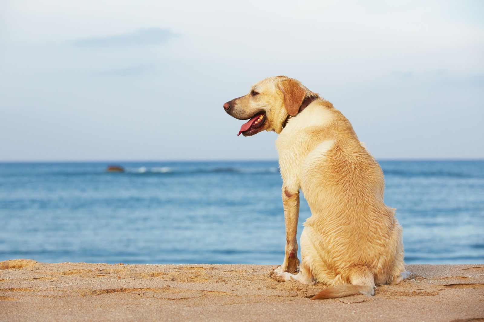 Dog Friendly OBX vacation Rentals