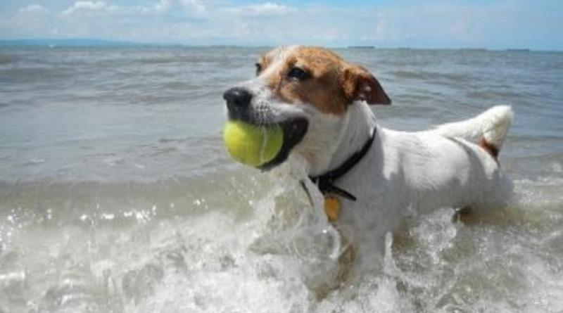 Outer Banks Pet Friendly Rentals | Atlantic Realty NC